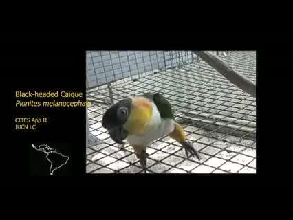 مرکز تحقیقات و اصلاح نژاد طوطی سانان در استرالیا