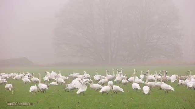 طبیعت زیبا همراه با موسیقی آرامش بخش 9 (HD)