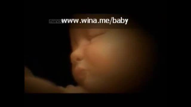 رشد جنین - قسمت چهارم