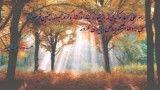 حدیث از کتاب نهج البلاغه حکمت دوازدهم