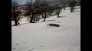 برف زمستانی و تصاویر زیبای کامفیروز