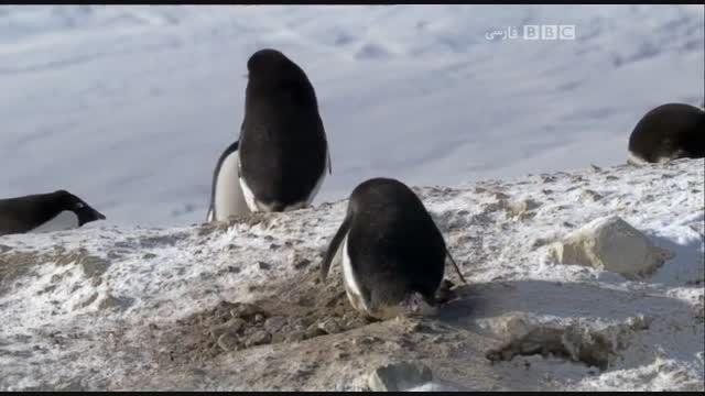 مستند سیاره یخ زده با دوبله فارسی - قسمت هفتم