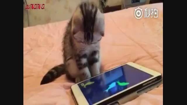 گربه در حسرت شکار ماهی موبایل فیلم گلچین صفاسا