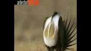 صداگذاری جالب روی حیوانات - خیلی جالب