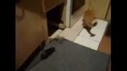ترس فجیع گربه از موش..
