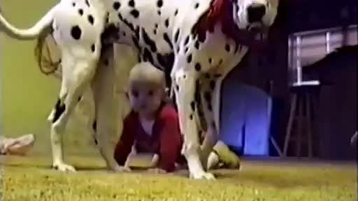 آخر عاقبت نگه داشتن سگ تو خونه همینه دیگه کشتش بچه رو