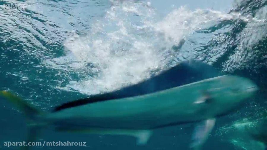 ویدیویی دیدنی از گریز ماهی های پرنده