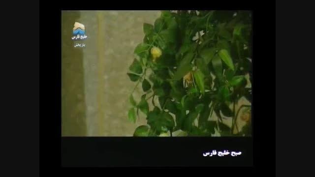 برنامه صبح خلیج فارس نوروز 91(پارت8)