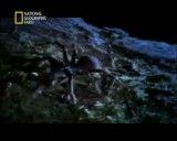 خطر ناک ترین موجودات در سترالیا