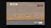 پرندگان مهاجر سیبری در ایران