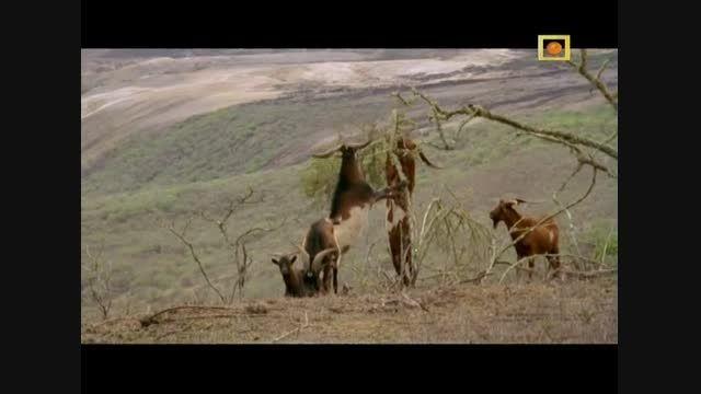 مستند اتنبرو 60 سال در حیات وحش با دوبله فارسی - قسمت 2