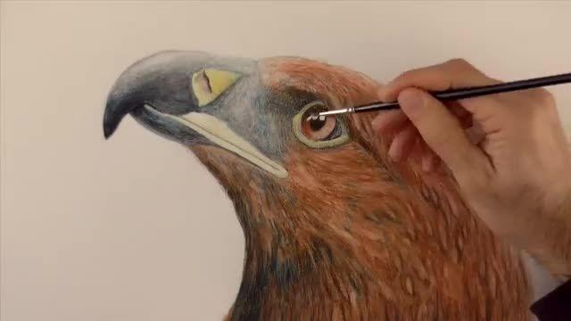 نقاشی سر عقاب با مداد رنگی آبرنگی