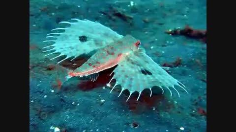 موجودات عجیب و شگفت انگیز دریایی
