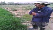 برنج کردستان