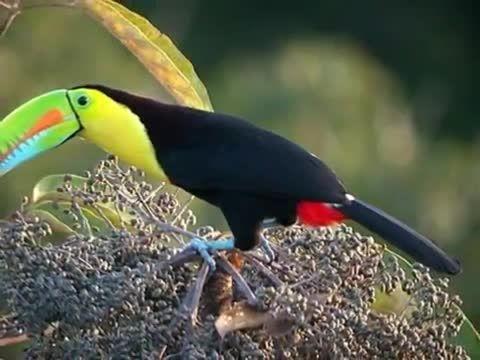 نماهنگی زیبا از طوطی های توکان در طبیعت