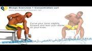 حرکات بدن سازی بازو - عضلات دو سر بازو