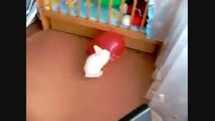 عکس  العمل خرگوش موقع ترسیدن