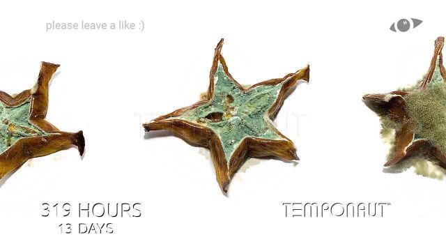 دانلود تایم لِپس (Timelapse) - میوه ستاره ای حلقه شده