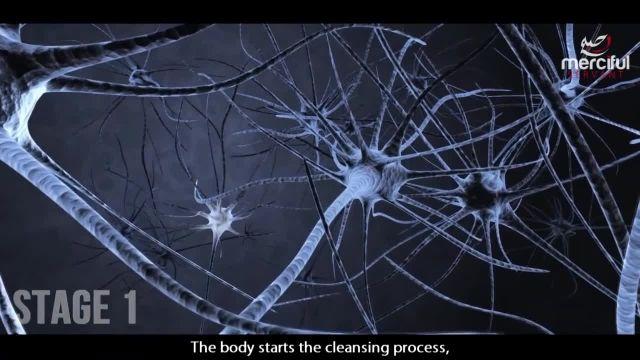 دانستنی هایی در مورد روزه چه تاثیری بر بدن ما دارد ؟