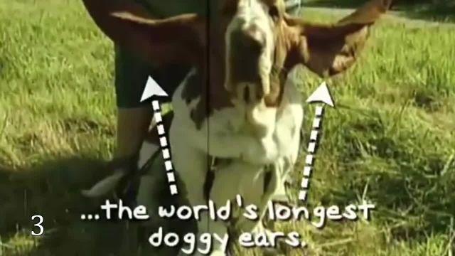 دانلود مستند در میان حیوانات (Among Animals) قسمت 18