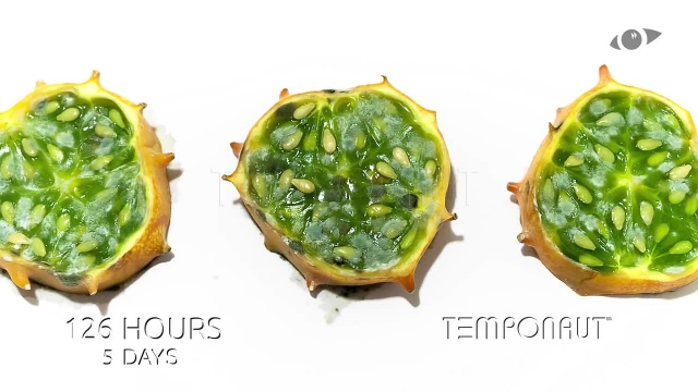 دانلود تایم لِپس (Timelapse) - کیوی سبز وحشی