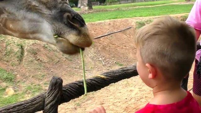 دانلود بازی دیانا و روما قسمت - موتورسواری و بازی دیانا با روما در باغ وحش