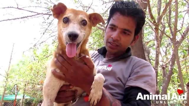 دانلود مستند در میان حیوانات (Among Animals) قسمت 30