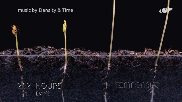 دانلود تایم لِپس (Timelapse) - رشد کردن ریشه گیاه