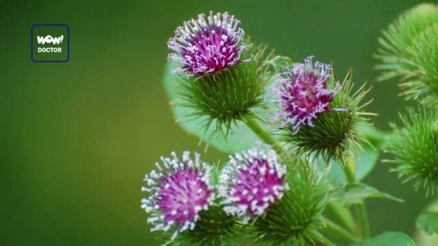 گیاهان موثر برای درمان عفونت بدن را بشناسید