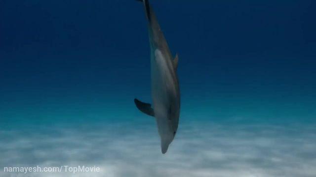 دانلود مستند صخره دلفین (Dolphin Reef 2020) دوبله فارسی