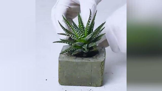 25 ترفند ساده و جالب برای کاشت گیاهان