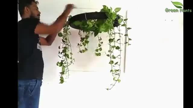 ایده هایی  فوق العاده برای آویزان کردن گل و گیاه