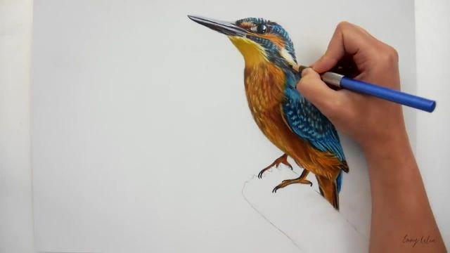 نقاشی و رنگ امیزی یک پرنده با مداد رنگی و پاستل