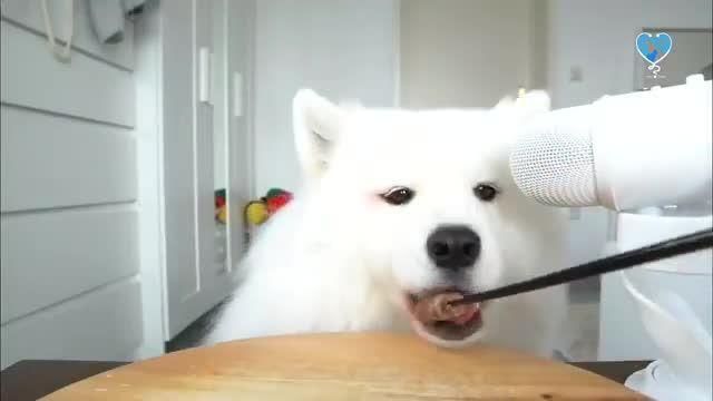 نگهداری سگ ها - طرز تهیه تشویقی سگ در خانه (خوشمزه، ساده و سریع)