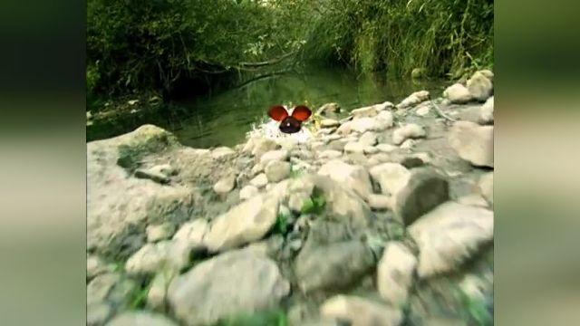دانلود انیمیشن زندگی خصوصی حشرات قسمت سی و سه