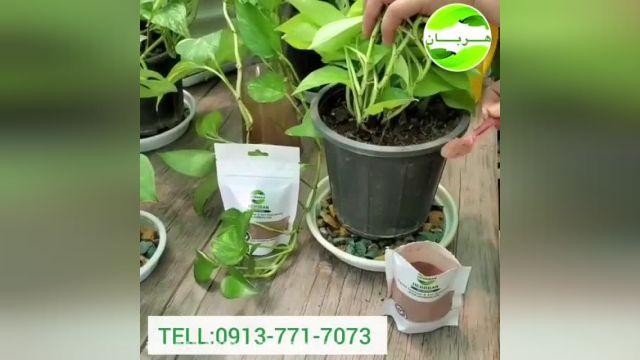 آموزش تصویری نگهداری از گیاه پتوس در منزل !