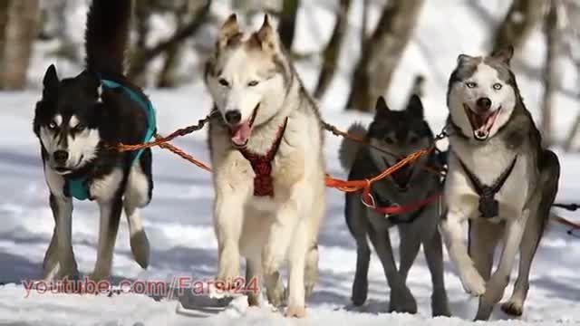 دربرابر حمله سگ چگونه از خود دفاع کنیم؟ - آموزش برخورد با حیوانات