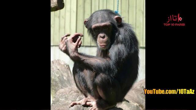 ویدیو بسیار جالب از معرفی 10 تا از باهوش ترین حیوانات دنیا