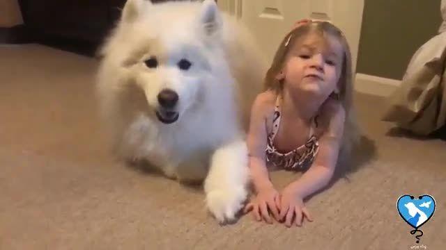 سگ ساموید را چقدر میشناسی؟ - شیرین کاری های سگ ساموید