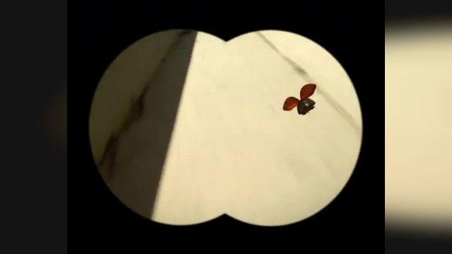 دانلود انیمیشن زندگی خصوصی حشرات قسمت سی ونه