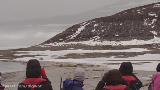 ویدیو جالب و دیدنی از حیات وحش قطب و خرس هایش !