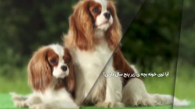 بهترین نژاد سگ برای من چیست؟ - چگونه نژاد سگ رو انتخاب کنیم؟