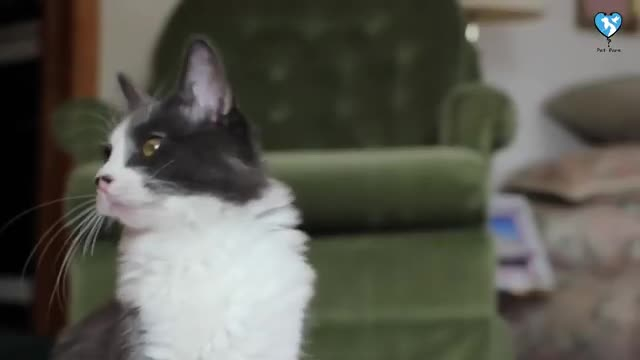 بهترین غذای گربه چیست؟ - نگهداری گربه در منزل