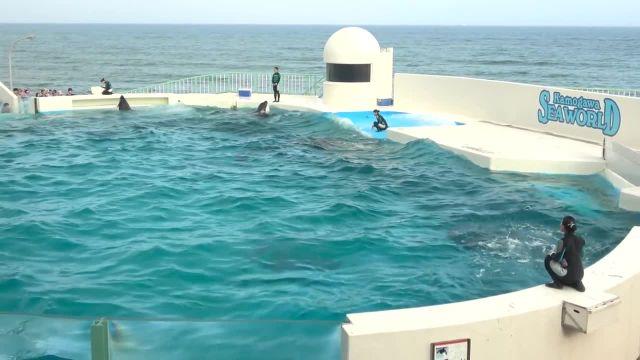 حرکات نمایشی و حرفه ای دلفین های پارک آبی ژاپن