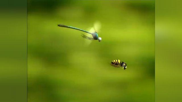 دانلود انیمیشن زندگی خصوصی حشرات قسمت پنجاه و سه