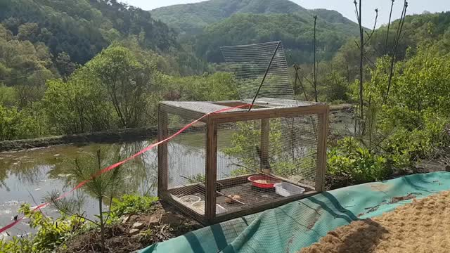 کلیپ جالب روش جدید تله پرنده با قفس چوبی !