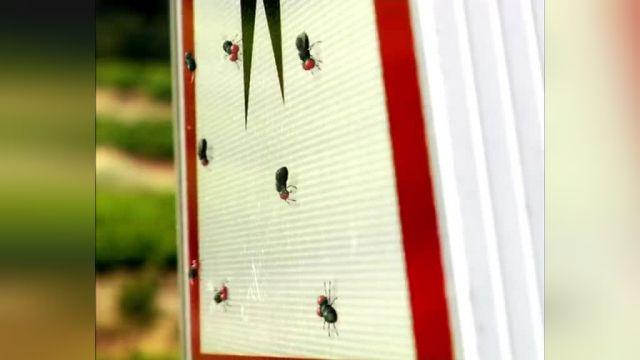 دانلود انیمیشن زندگی خصوصی حشرات قسمت سیزده
