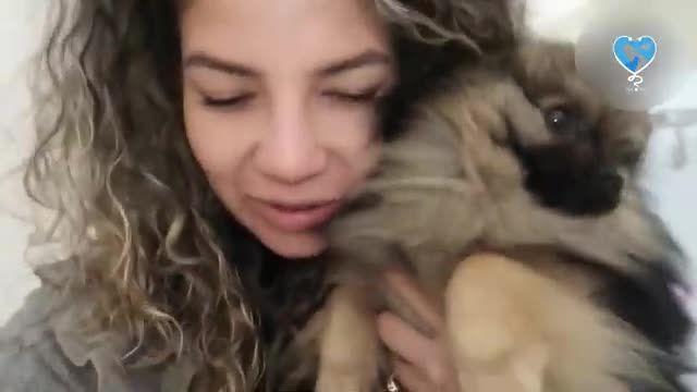 همه چیز درباره سگ اشپیتز - حقایق جالب درباره سگ اشپیتز