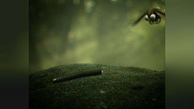 دانلود انیمیشن زندگی خصوصی حشرات قسمت شصت و دو