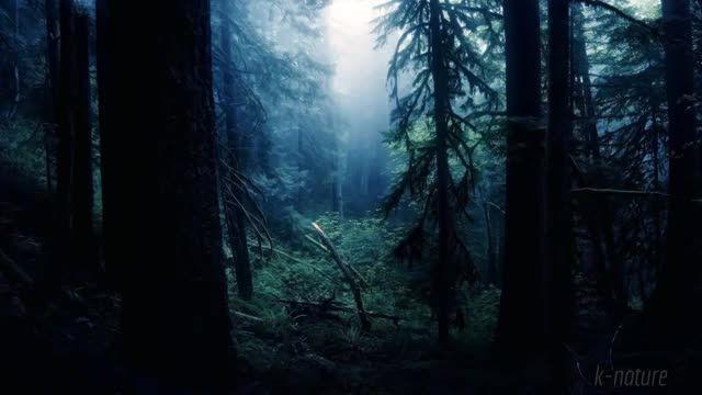 کلیپ باورنکردنی از صدای جنگل در شب (جیرجیرک ها ، جغد ها و ... )